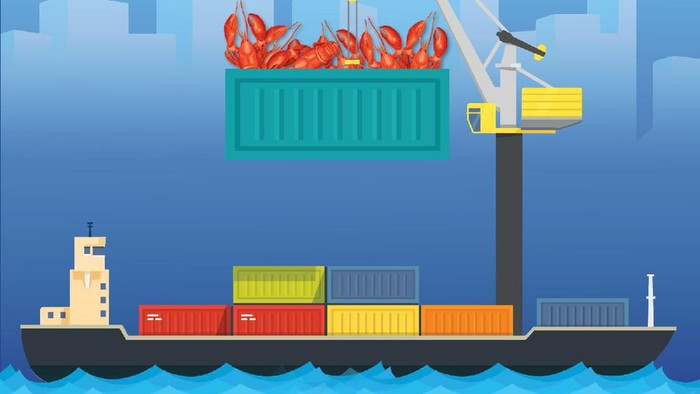 ekspor benih lobster