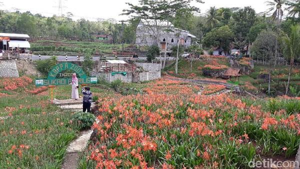 Kebun bunga seluas 3.500 meter persegi ini pun tampak lengang. Hanya ada 1-2 orang pengunjung saja yang datang ke sini (Pradito/detikcom)