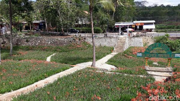 Ke depannya, untuk mengatasi msalah ini, pihak pengelola berencana untuk membangun bak penampungan air agar bunga Amarilis di kebunnya mekar secara bersamaan (Pradito/detikcom)