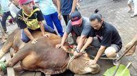 Mirip Kurban, Masyarakat Batak Toba Punya Tradisi Marbinda Saat Natal