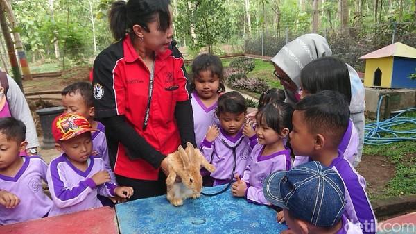 Ada juga taman kelinci. Di taman ini, anak-anak bisa memberi makan atau mencoba memeriksa detak jantung kelinci menggunakan stetoskop. Wisata Kampung Susu rata-rata dikunjungi 500-1.000 pengunjung per hari. (Adhar Muttaqin/detikcom)