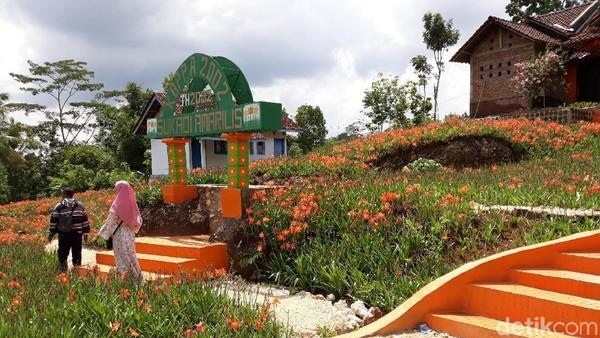 Pada saat awal bunga amarilis mekar, ada sekitar 1.000 orang pengunjung yang datang ke sini. Namun sekrang hanya tinggal ratusan orang saja (Pradito/detikcom)