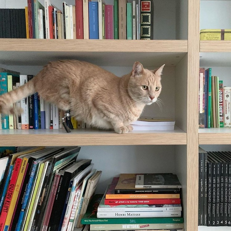 Kecelakaan Kucing Ini Pakai Kaki Bionik
