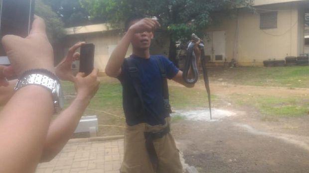Damkar Tangkap Sanca dan 2 Ekor Kobra di Kantor PPA Jaktim