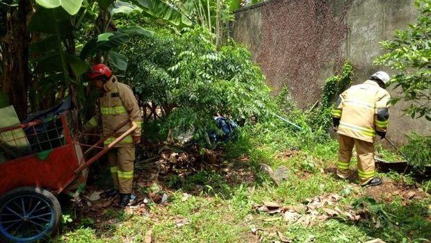 9 Anak Kobra Ditemukan di Ciracas Jaktim