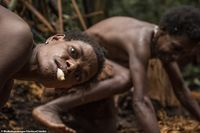 Makan Sagu hingga Ulat, Suku Korowai di Papua Barat Punya Pola Makan Alami