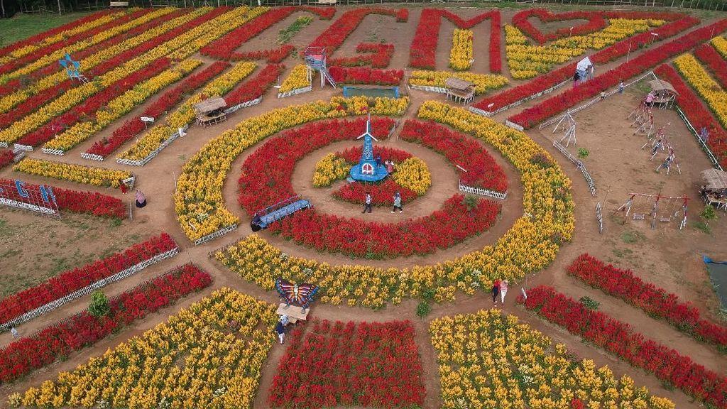 Menikmati Indahnya Wisata Taman Bunga Dharmasraya