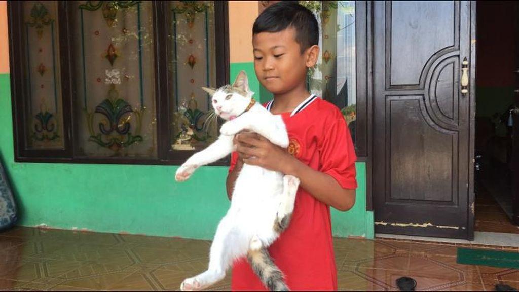 Kucing Penyelamat Majikan dari Teror Kobra Dipiara untuk Basmi Tikus