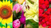 Pilih Bunga Favorit dan Ungkap Kepribadian Tersembunyi Kamu