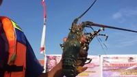 Izin Ekspor Benih Lobster 14 Perusahaan Dicabut karena Palsukan Data