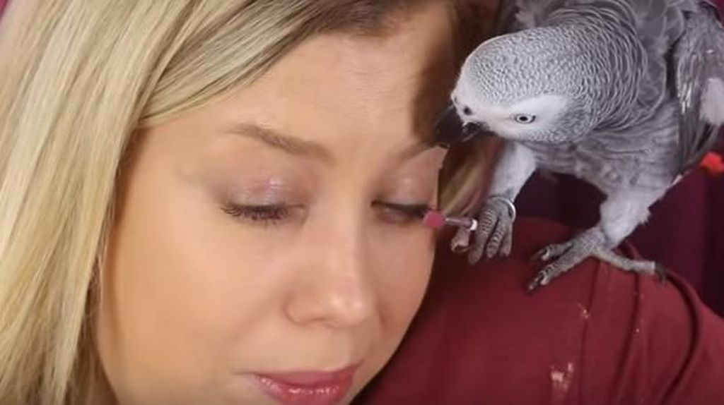 Youtuber Ini Wajahnya Dirias Oleh Burung Beo, Akhirnya Bikin Ngakak