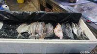 Ikan Ikanan: Puas Makan Ikan Laut Bakar hingga Ikan Laut Goreng di Sini