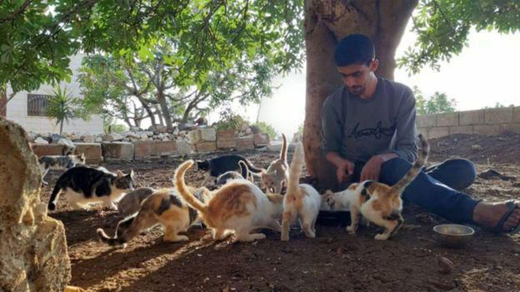 Kisah Sedih Kota yang Lebih Banyak Kucingnya ketimbang Manusia