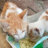 Kisah Sedih di Kota yang Lebih Banyak Kucing Dibanding Manusia