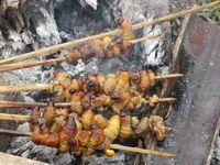 Mengapa Orang Papua Makan Ulat Sagu?