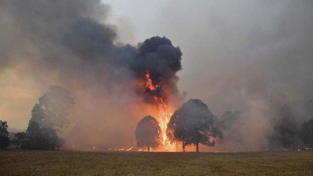 Petenis top dunia gelar laga amal untuk kebakaran hutan dan lahan di Australia.