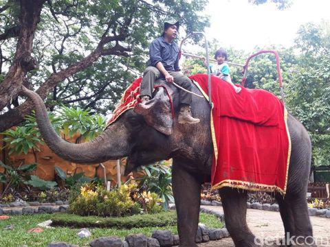 Libur Tahun Baru, Pengunjung Kebun Binatang Surabaya Capai 40 Ribu