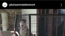 Warga Kelapa Gading Terobos Banjir, Selamatkan Anjing Milik Tetangga