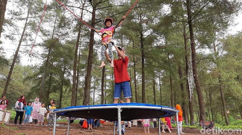 Foto: Anak-anak main trampolin di area hutan pinus limpakuwus (Arbi Anugerah/detikcom)