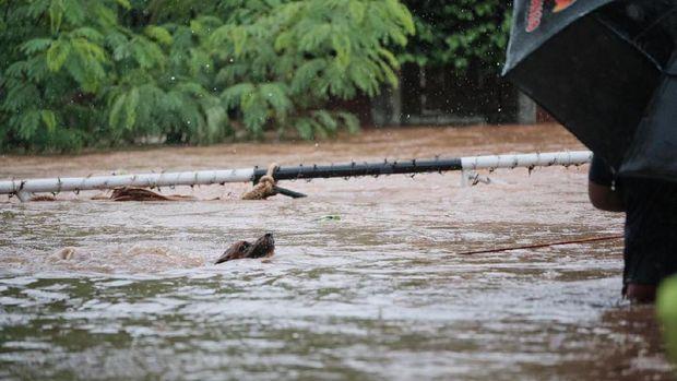Viral Kisah Heroik Penyelamatan Anjing yang Terjebak Banjir di Cinere