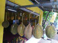 Berburu Durian di Benteng Kampung Durian Ciamis Untuk Oleh-oleh