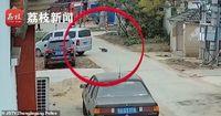Waduh! Pemilik Resto Ini Tertangkap Curi 8 Anjing untuk Diolah Jadi Hot Pot
