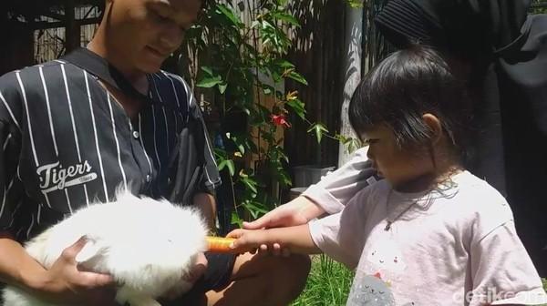 Traveler bisa berinteraksi dengan kelinci-kelinci gemas di sini. Bisa memberi makan dan juga menyentuhnya. (Hakim Ghani/detikcom)