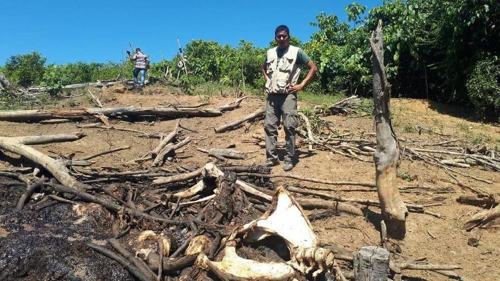 BKSDA Kembali Temukan 3 Kerangka Gajah Diduga Mati Tersetrum di Aceh