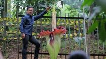 Lihat Bunga Bangkai Mekar, Bima Arya: Harta Karun di Kebun Raya
