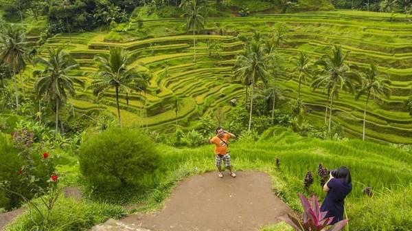 Tegalallang Rice Terrace bisa dikunjungi oleh pemilik zodiak Gemini yang biasanya menyukai keterkaitan dengan alam. Jauh dari keramaian, destinasi ini cocok untuk traveler yang mau melepas penat (iStock)