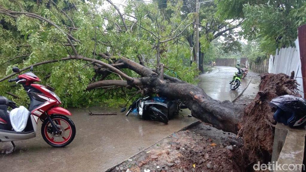 Pohon Tumbang Timpa Kakek-Nenek di Makassar