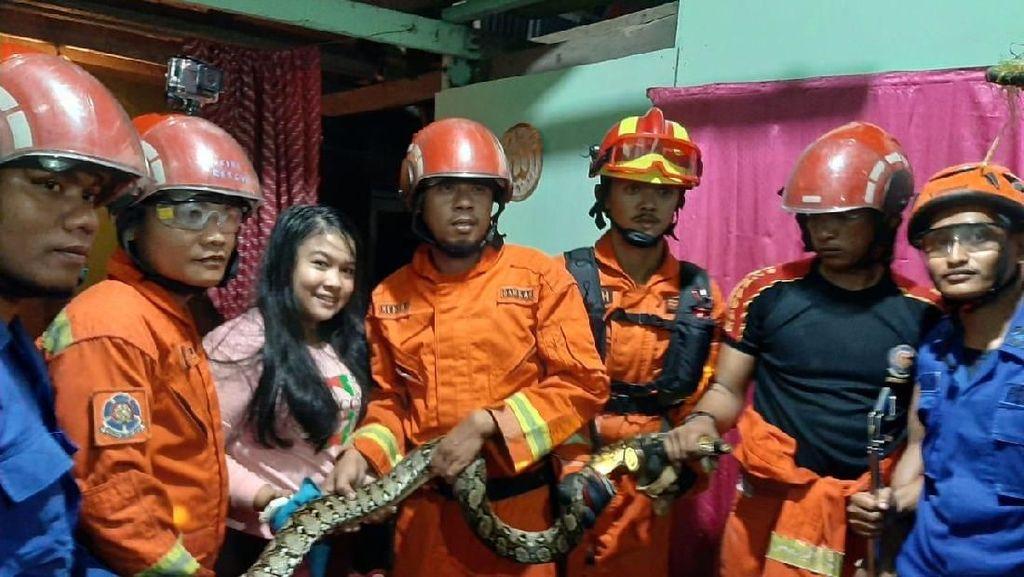 Damkar Tangkap Ular Piton 3 Meter yang Masuk Rumah Warga di Makassar