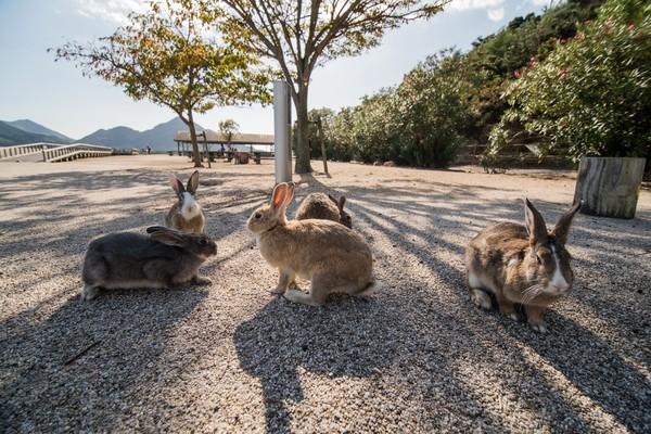 Pulau satu ini bernama Okunoshima di timur Jepang. Pulau ini dihuni oleh ratusan kelinci liar yang imut. (iStock)
