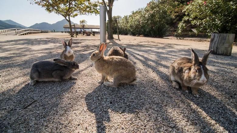 Pulau Kelinci di Jepang. (Foto: iStock)