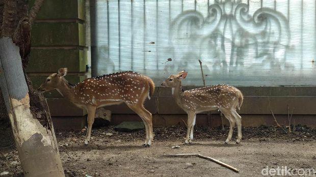 Ada Harimau Benggala, Ini Wujud 'Kebun Binatang' Milik Sepupu Raffi Ahmad