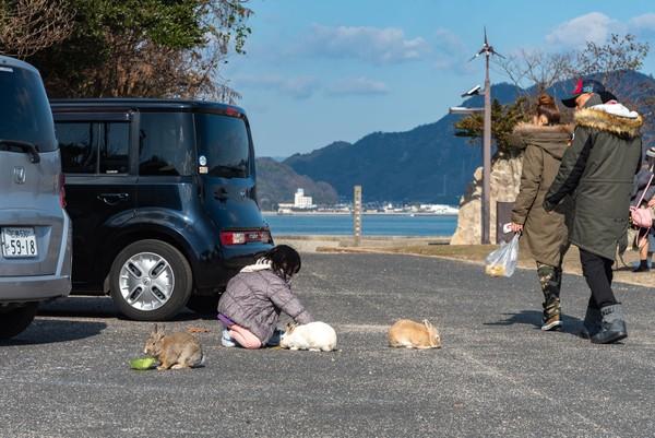 Tak tahu teori mana yang benar, tapi yang pasti Okunishima jadi pulau bebas predator di Jepang. Pemerintah daerah melarang kucing dan anjing untuk dibawa ke pulau ini. (iStock)