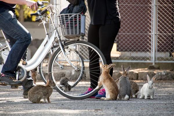 Teori lain yang juga beredar adalah ada segerombolan anak sekolah yang datang ke pulau ini pada tahun 1971. Mereka datang dengan membawa 8 ekor kelinci yang diharapkan bisa berkembang biak di pulau ini. (iStock)