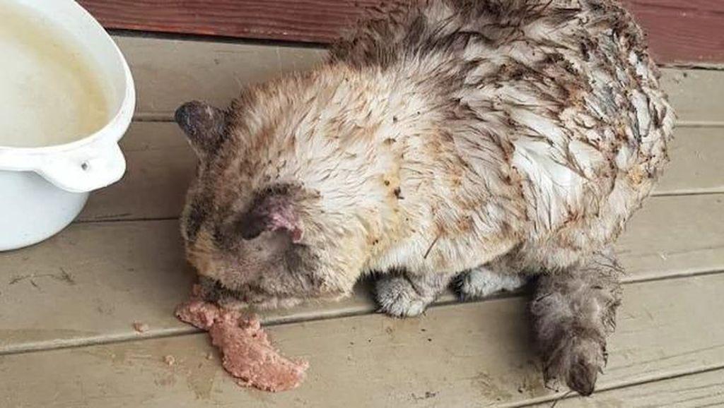 Kisah Kucing Pulang Usai 7 Hari Hilang di Kebakaran Australia