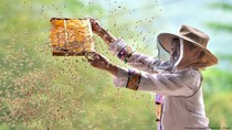 Manfaatkan Aplikasi Berbagi Video, Petani China Raup Untung Besar Saat Panen