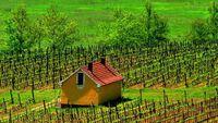 Kebun anggur di Royal Tokaji Wine Company