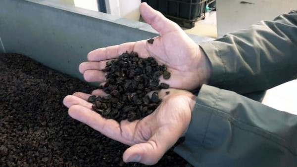 Wine manis yang diproduksi di sini bergantung pada botrytis cinerea atau pembusukan mulia. Itu akan mengeringkan anggur pada pokok anggur, mengerut dan menjadi sesuatu yang tampak seperti kismis coklat (Foto: Royal Tokaji Wine Company/CNN)