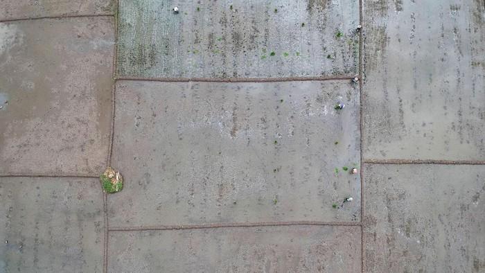 Foto aerial sejumlah petani menanam padi di areal persahawan Desa Pesarean, Kabupaten Tegal, Jawa Tengah, Jumat (10/1/2020). Kementerian Pertanian menargetkan cetak sawah baru naik dari 6.000 hektar pada 2019 menjadi 10.000 hektare pada 2020 dengan mengalokasikan anggaran sebesar Rp200 miliar untuk merealisasikan cetak sawah.  ANTARA FOTO/Oky Lukmansyah/ama.