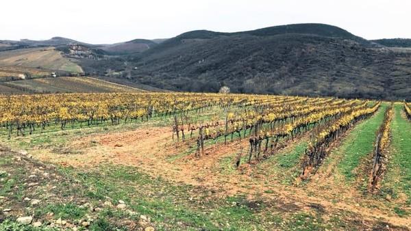 Perjalanan sehari ke sana sangatlah populer bagi para wisatawan (Foto: Royal Tokaji Wine Company/CNN)