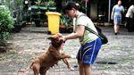Asyik! Ada Layanan Vaksinasi Gratis Untuk Hewan Terdampak Banjir