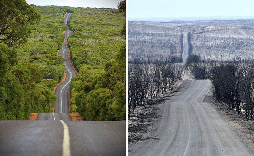 Kangaroo Island atau pulau kanguru sebelum dan sesudah dilalap api. Api membara melumat bagian New South Wales, Victoria dan Western Australia. Foto: Bored Panda