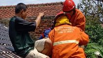 Perbaiki Genting, Warga Ciracas Kaget Lihat Sanca Ngumpet di Balik Seng