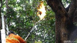 Sarang Tawon Vespa di Probolinggo Dibakar Setelah Bikin Warga Masuk RS