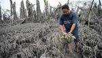 Potret Kota Tagaytay Tertutup Abu Vulkanik Taal Volcano