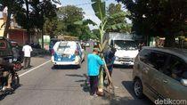 Jalan Nasional Semarang-Purwokerto Ditanami Pohon Pisang, Ada Apa?