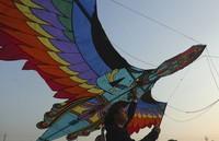 Karena perayaan ini sangat besar, jadi Uttarayan dijadikan sebagai hari libur nasional di India. Selama festival, hasil panen lokal seperti sayur, kacang-kacangan, umbi-umbian ditampilkan dan disajikan pada banyak orang. AP Photo/Mahesh Kumar A